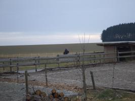 Foto 3 Pferdehof Stetten hat Plätze frei
