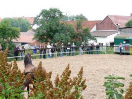 Foto 3 Pferdehof, Bauernhof zur Pferdehaltung, kleine Reitanlage
