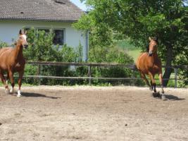 Foto 6 Pferdehof, Bauernhof zur Pferdehaltung, kleine Reitanlage