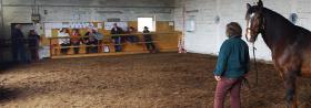 Foto 15 Pferdehof, Bauernhof zur Pferdehaltung, kleine Reitanlage