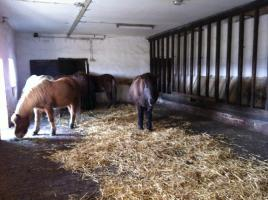 Foto 3 Pferdeimmobilie: 2FamHaus, Stall, Paddock, Weiden