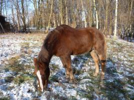 Pferdepfleger/in