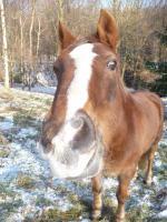 Foto 2 Pferdepfleger/in