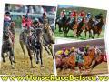 Pferderennen online Live-Stream
