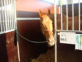 Pferdeschutz sucht Paten, Sach-und Geldspenden, sowie Sponsoren und F�rderer