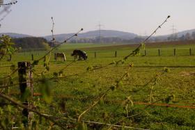 Pferdestall, Pferdebox in Löhne frei