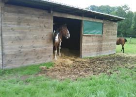 Foto 4 Pferdestall, Pferdebox in Löhne frei