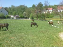 Foto 5 Pferdestall  in Wilhermsdorf  sucht nette Einsteller