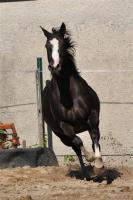 Pferdeverkauf leicht gemacht!!