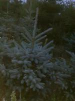 Foto 2 Pflanzen