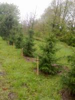 Foto 3 Pflanzen