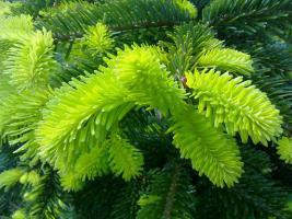 Foto 5 Pflanzen