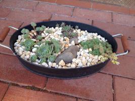Pflanzschale mit Pflanzen