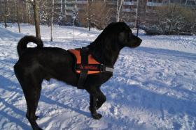 Pflegehund Blacky sucht dauerhaftes Zuhause
