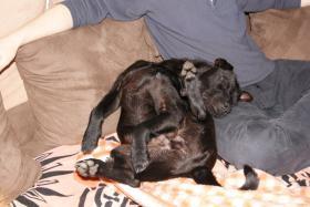 Foto 2 Pflegehund Blacky sucht dauerhaftes Zuhause