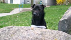 Foto 3 Pflegehund Blacky sucht dauerhaftes Zuhause