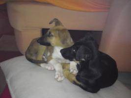 Phantom und Felix suchen ein neues Zuhause