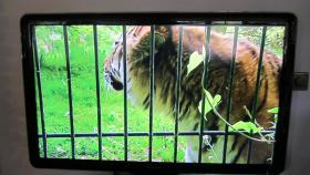 Foto 5 Philips LCD Fernseher 47'' 1080P neuwertiger Zustand 375, -EUR VB