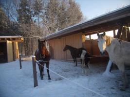 Foto 3 Pl�tze in sch�nem Offenstall frei!