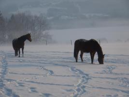 Foto 4 Pl�tze in sch�nem Offenstall frei!