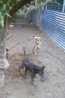 Foto 3 Pocito ein Traum so süss und lieb  4 Monate