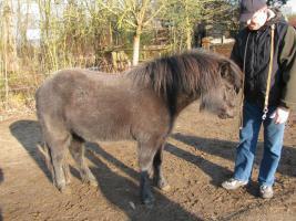 Foto 2 Pony-Stute 4-jährig