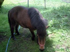 Foto 3 Pony-Stute - Luna