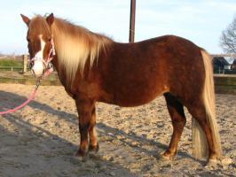 Pony sucht Reitbeteiligung
