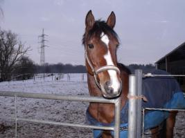 Pony sucht neues Zuhause