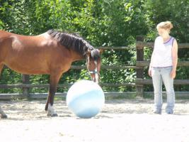 Foto 2 Pony sucht neues Zuhause