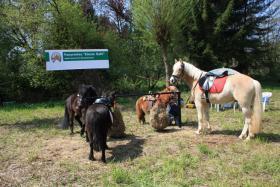 Foto 2 Ponyreiten ''Kleine Hufe'' in Remscheid