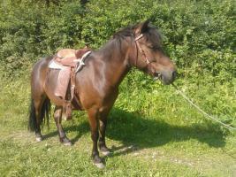 Foto 3 Ponyreiten ''Kleine Hufe'' in Remscheid