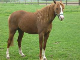 Pferde 029neu