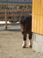 Foto 3 Ponywallach - günstig abzugeben