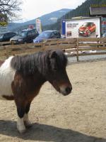 Foto 4 Ponywallach - günstig abzugeben