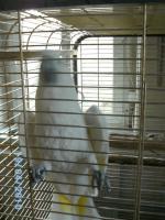 Foto 2 Prachtstück von Kakadu