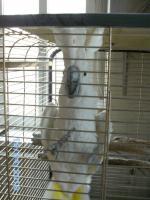 Foto 3 Prachtstück von Kakadu