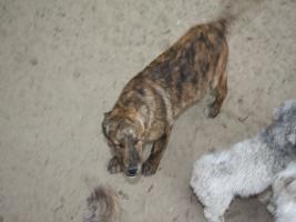 Private Tiervermittlung hat Abgabehunde