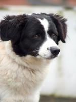 Foto 3 Private Tiervermittlung hat Abgabehunde