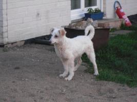 Foto 4 Private Tiervermittlung hat Abgabehunde