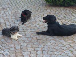 Probleme mit Ihrem Hund?Das DOGS REHABILITATIONS CENTRE hilft...