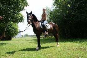 Foto 2 Quarter Horse Mix
