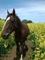 Foto 2 Quarter <horse