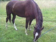 Foto 3 Quarter <horse