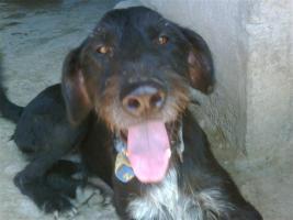RAYO – ein Freund fürs Leben (Tierschutzhund)