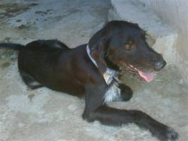 Foto 4 RAYO – ein Freund fürs Leben (Tierschutzhund)