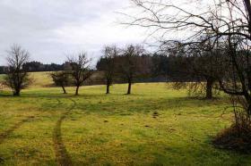 Foto 7 RE/MAX Family - Idyllisch gelegene Landwirtschaft (ca. 8,3 ha) im nördlichen Salzburger Land