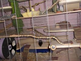 Foto 2 RIESIGER Hamster / Mäusekäfig mit SEHR VIEL ZUBEHÖR