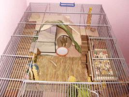 Foto 3 RIESIGER Hamster / Mäusekäfig mit SEHR VIEL ZUBEHÖR