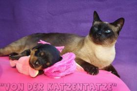 Foto 5 ''ROTTWEILERWELPEN von der Katzentatze''